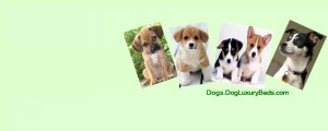 Dog Products to Keep Your Dog Healthy And Happy. Shop Online at DogLuxuryBeds.com