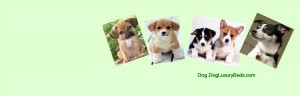 Dog.DogLuxuryBeds.com presents Dog Products to Keep Your Dog Healthy And Happy. Shop Online at DogLuxuryBeds.com