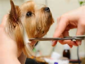 Cutting Dogs Hair