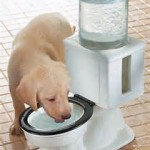 Puppy-Drinking-Water-From-Toilet-Bowl-Model