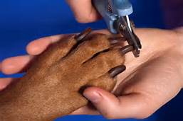 Trimming Dogs Nails With Clipper