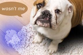 UV Blacklight Detects Dog Urine