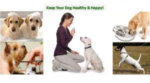 Dog.DogLuxuryBeds.com Keep Your Dog Healthy and Happy