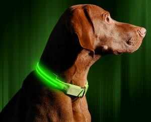 Dog.Dog Luxury Beds Lighted Led Dog Safety Collar Green