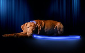 Dog Lighted LED Leash Blue
