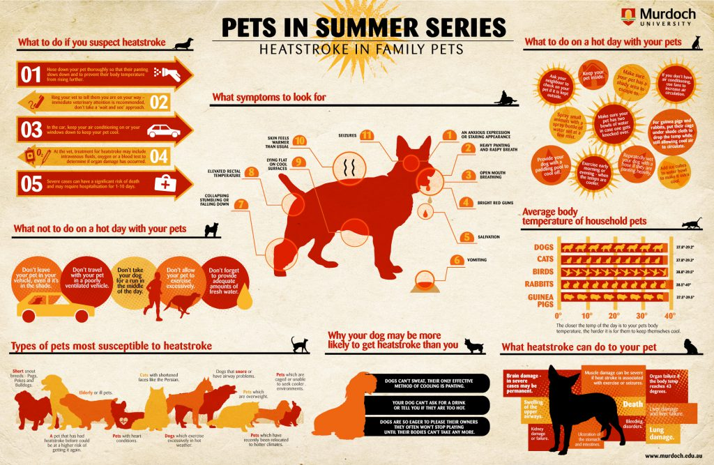 Heatstroke In Family Pets
