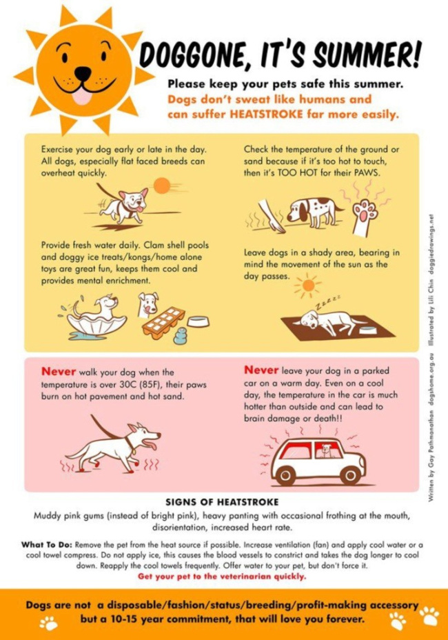 Its Summer Pet Safety Tips